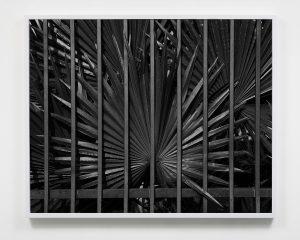 عکس های جدید مارک مکنایت مارک مکنایت ، عکاسی مستقر در شهر لسآنجلس است که در آثار خود توجه ویژهای به طبیعت و بدن انسان دارد. او در عکسهای اخیرش سعی کرده بدن انسان را وارد پهنه طبیعت کند و حتی طبیعت را در عناصر تصویری آن بیابد.این عکاس در سالهای اخیر به شدت مورد توجه محافل هنری آمریکا قرار گرفته است.