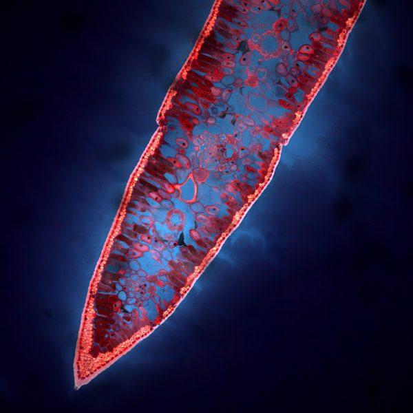 فرنان فدریکی پژوهشگری در دانشگاه کمبریج است که روی بافتهای زیستی کار میکند.